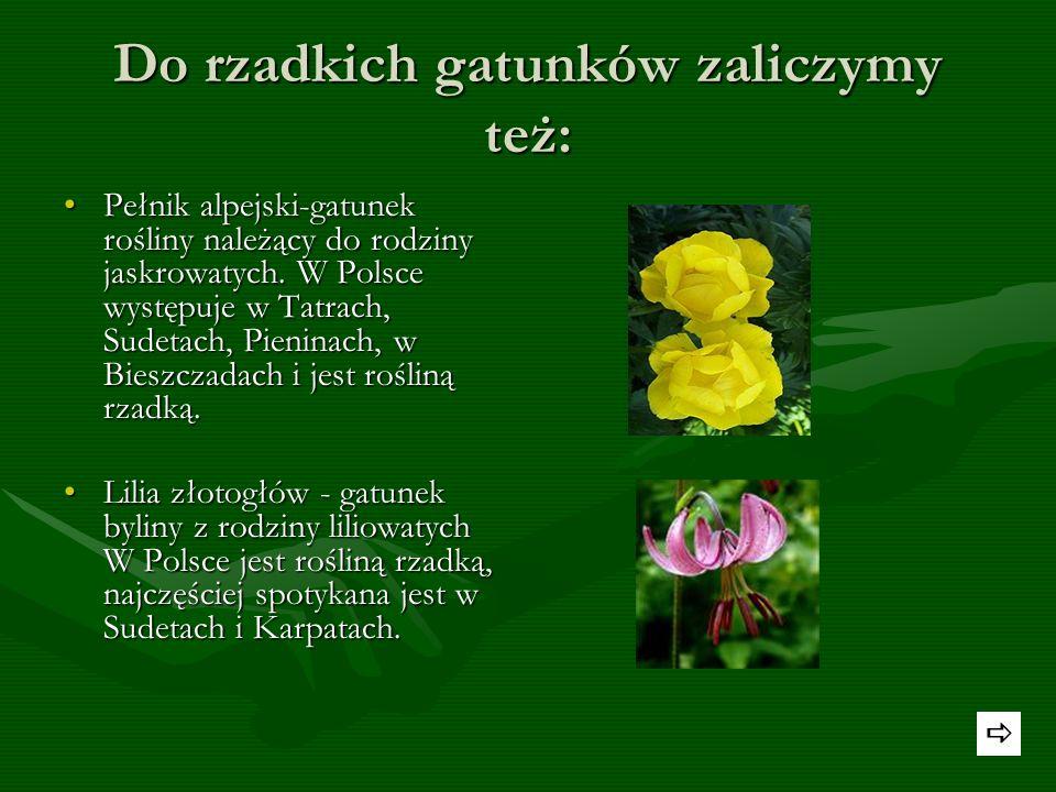 Rzadko występujące rośliny chronione to: Fiołek mokradłowy - gatunek rośliny wieloletniej należący do rodziny fiołkowatych. W Polsce występuje wyłączn