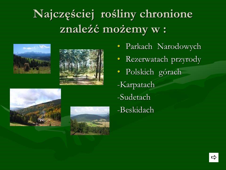 Do rzadkich gatunków zaliczymy też: Pełnik alpejski-gatunek rośliny należący do rodziny jaskrowatych. W Polsce występuje w Tatrach, Sudetach, Pieninac