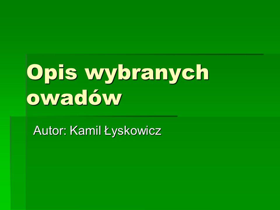 Opis wybranych owadów Autor: Kamil Łyskowicz