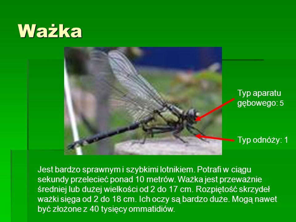 Ważka Jest bardzo sprawnym i szybkimi lotnikiem. Potrafi w ciągu sekundy przelecieć ponad 10 metrów. Ważka jest przeważnie średniej lub dużej wielkośc