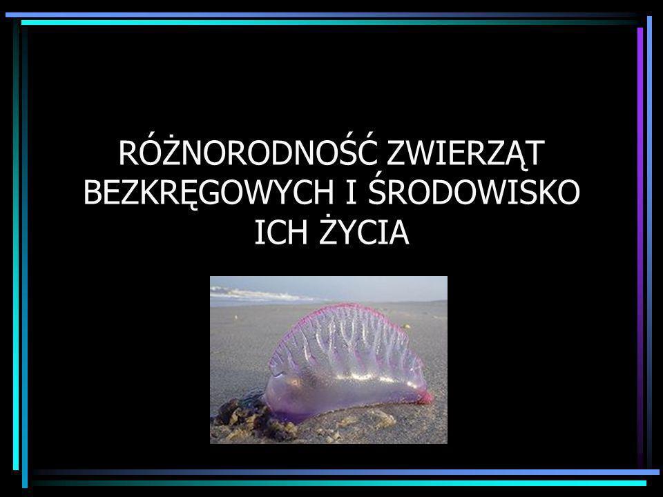 UKWIAŁ Są rozpowszechnione w niemal wszystkich morzach świata.