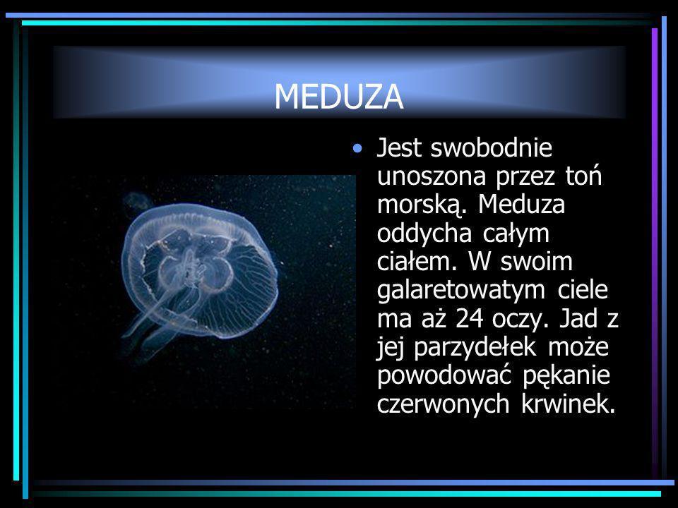 MEDUZA Jest swobodnie unoszona przez toń morską. Meduza oddycha całym ciałem. W swoim galaretowatym ciele ma aż 24 oczy. Jad z jej parzydełek może pow