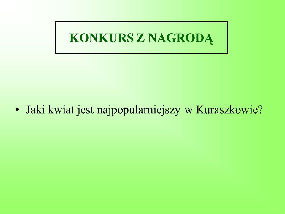 KONKURS Z NAGRODĄ Jaki kwiat jest najpopularniejszy w Kuraszkowie?
