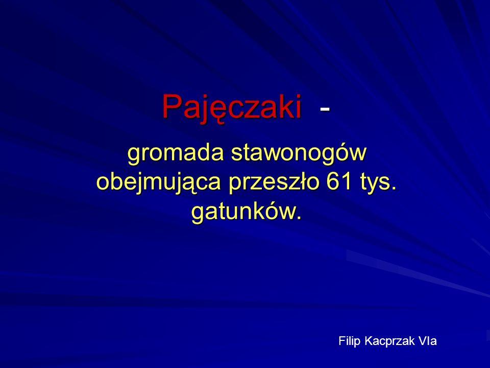 Pajęczaki - gromada stawonogów obejmująca przeszło 61 tys. gatunków. Filip Kacprzak VIa