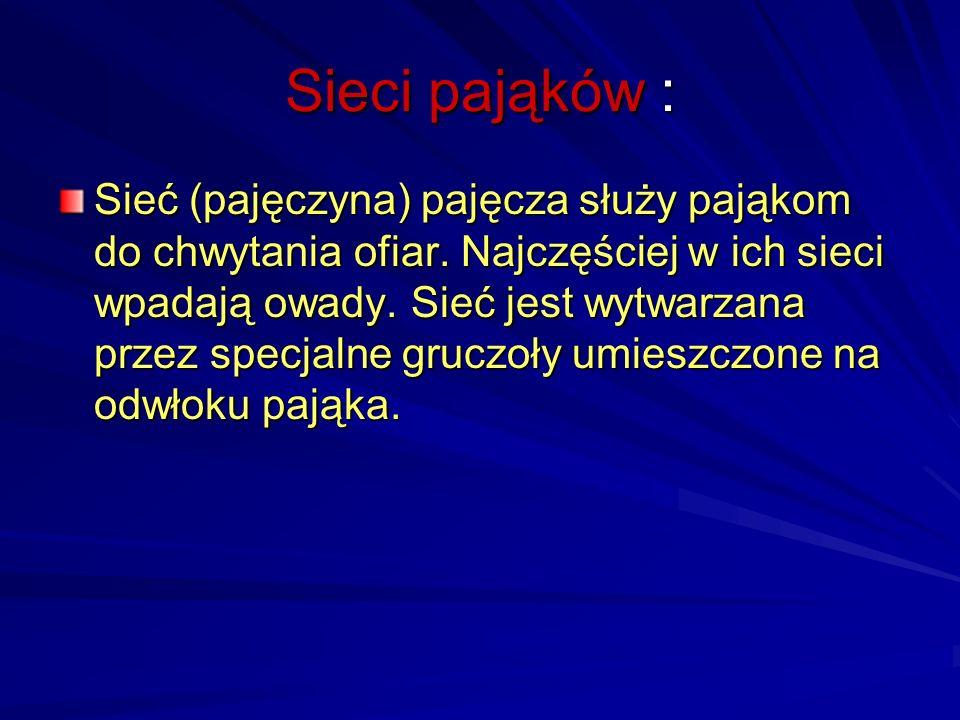 Pajęczaki :