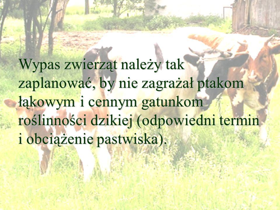 Wypas zwierząt należy tak zaplanować, by nie zagrażał ptakom łąkowym i cennym gatunkom roślinności dzikiej (odpowiedni termin i obciążenie pastwiska).