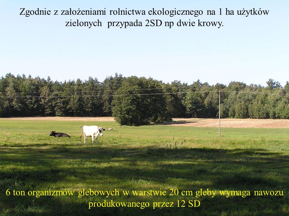 Zgodnie z założeniami rolnictwa ekologicznego na 1 ha użytków zielonych przypada 2SD np dwie krowy. 6 ton organizmów glebowych w warstwie 20 cm gleby