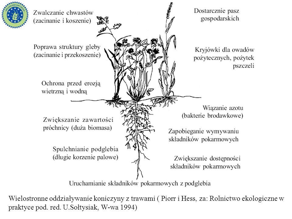 Wielostronne oddziaływanie koniczyny z trawami ( Piorr i Hess, za: Rolnictwo ekologiczne w praktyce pod. red. U.Sołtysiak, W-wa 1994)