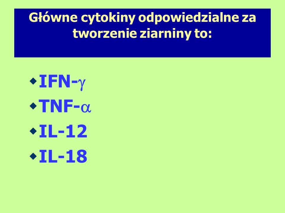 Główne cytokiny odpowiedzialne za tworzenie ziarniny to: IFN- TNF- IL-12 IL-18