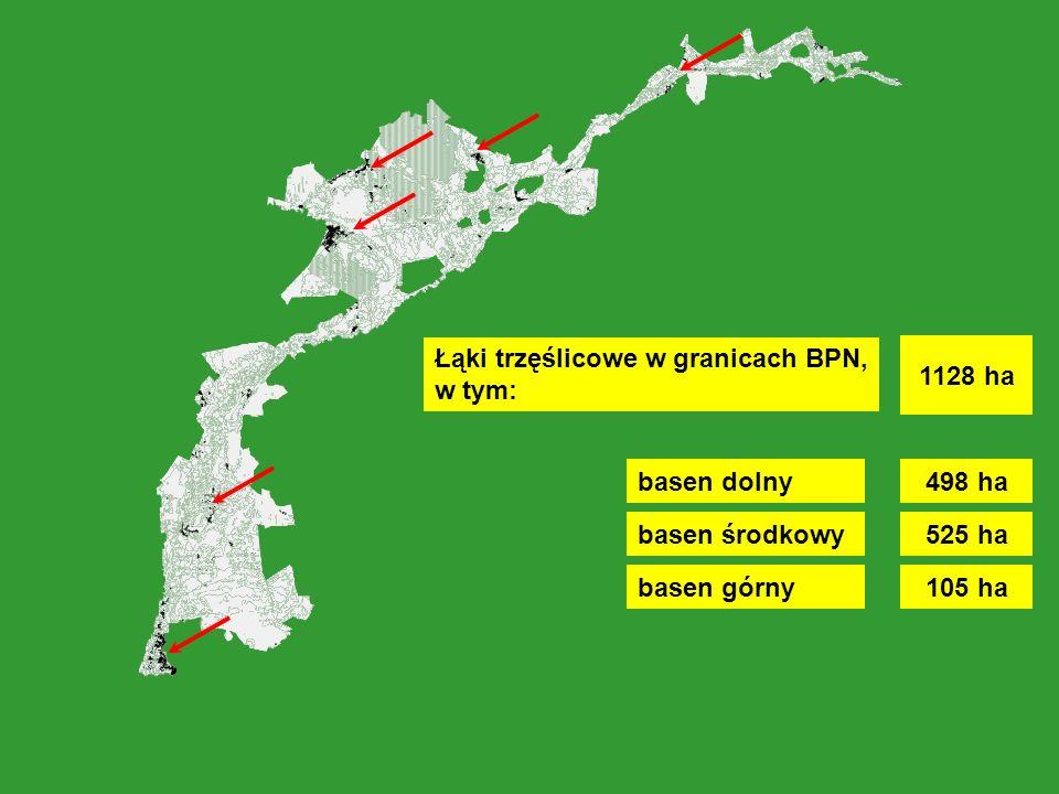 Łąki trzęślicowe w granicach BPN, w tym: basen dolny basen środkowy basen górny 498 ha 525 ha 105 ha 1128 ha