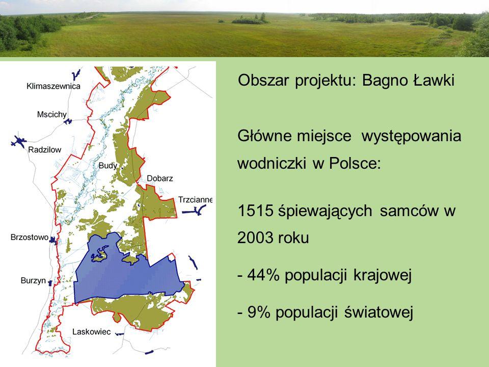 Obszar projektu: Bagno Ławki Główne miejsce występowania wodniczki w Polsce: 1515 śpiewających samców w 2003 roku - 44% populacji krajowej - 9% popula