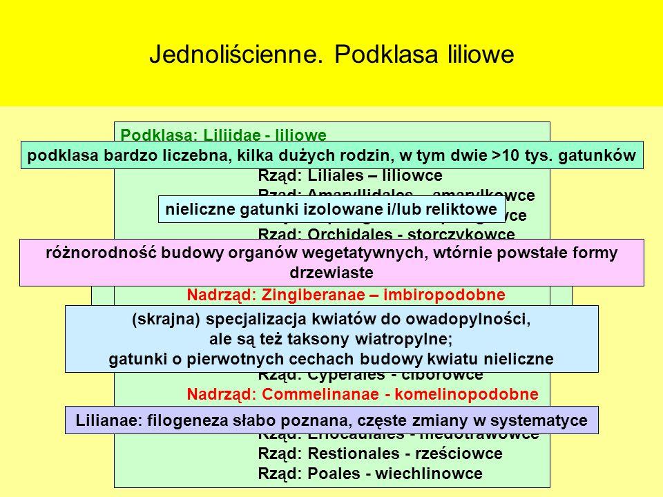 Jednoliścienne. Podklasa liliowe Klasa: Liliopsida (=Monocotyledones) - jednoliścienne około 60 tysięcy gatunków Podklasy: Alismatidae – żabieńcowe Tr