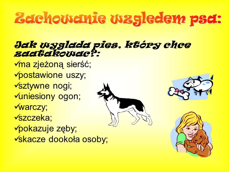 Jak wyglada pies, który chce zaatakowac?: ma zjeżoną sierść; postawione uszy; sztywne nogi; uniesiony ogon; warczy; szczeka; pokazuje zęby; skacze doo