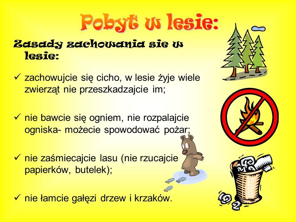 Niebezpieczenstwa jakie moga spotkac w lesie: możecie się zgubić - nie wchodźcie sami do lasu, pilnujcie się dorosłych; możecie zarazić się groźnymi chorobami: - wścieklizną - nie dotykajcie dzikich zwierząt - przenoszonymi przez kleszcze (borelioza, odkleszczowe zapalenie opon mózgowych); wybierając się do lasu ubierzcie się właściwie: czapka, spodnie, bluza, adidasy.