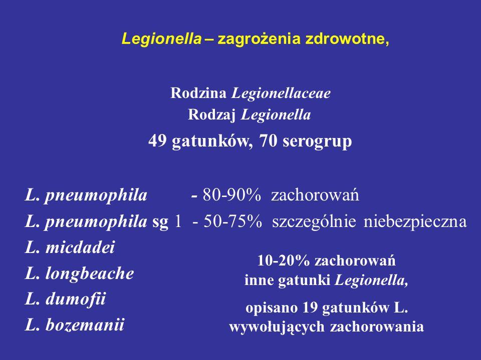 Legionella – zagrożenia zdrowotne, Rodzina Legionellaceae Rodzaj Legionella 49 gatunków, 70 serogrup L. pneumophila - 80-90% zachorowań L. pneumophila