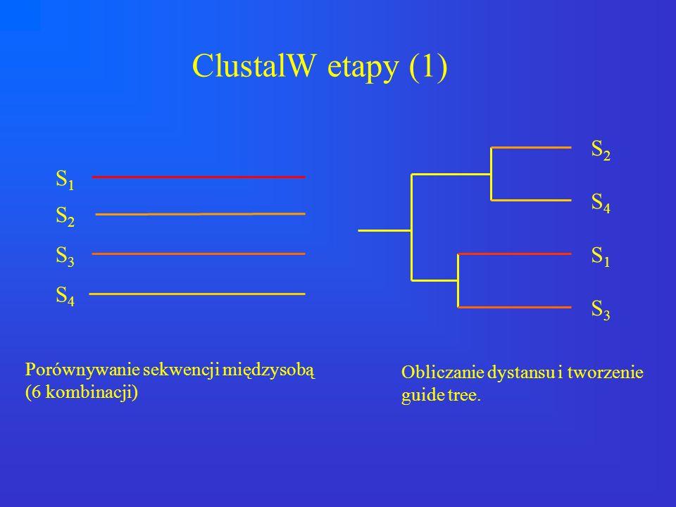 S1S1 S2S2 S4S4 S3S3 S2S2 S4S4 S1S1 S3S3 Porównywanie sekwencji międzysobą (6 kombinacji) Obliczanie dystansu i tworzenie guide tree. ClustalW etapy (1