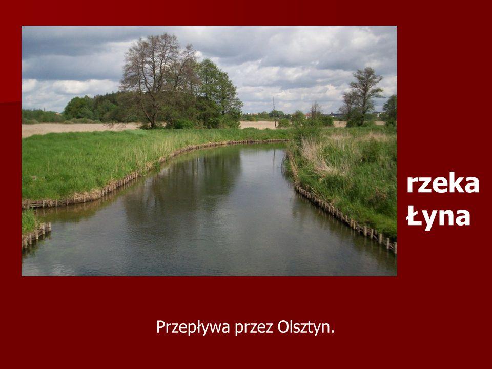 Przepływa przez Olsztyn. rzeka Łyna