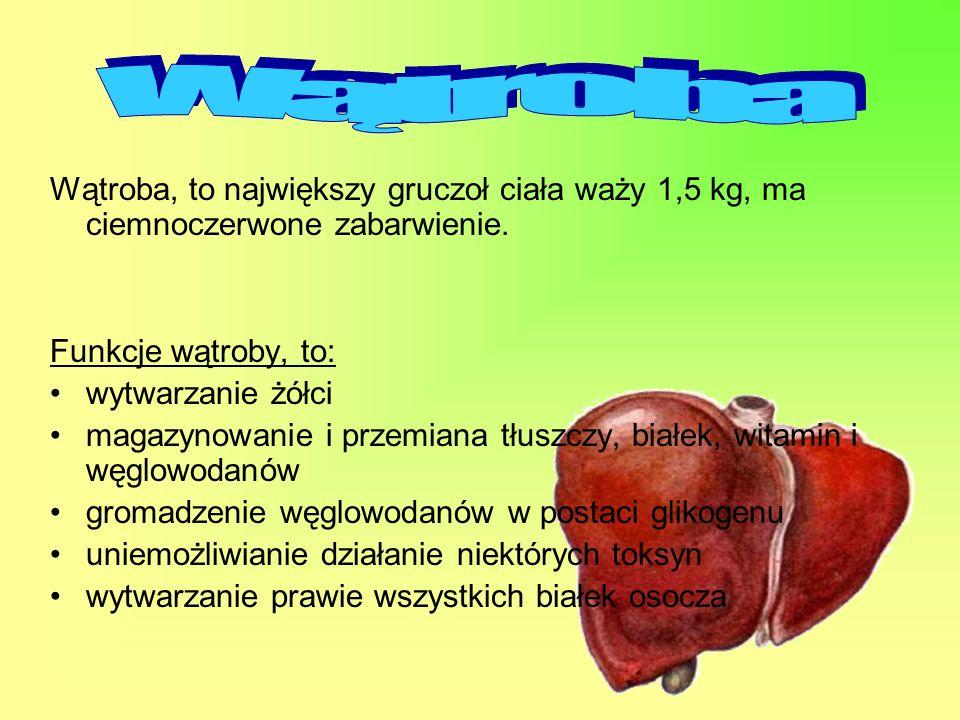Wątroba, to największy gruczoł ciała waży 1,5 kg, ma ciemnoczerwone zabarwienie. Funkcje wątroby, to: wytwarzanie żółci magazynowanie i przemiana tłus