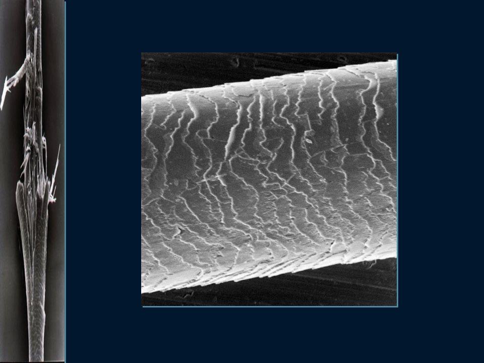 Co niszczy włosy ? tarcie, pociąganie i inne działania mechaniczne wysoka temperatura chlorowana woda w basenie promieniowanie UV zawarte w świetle sł