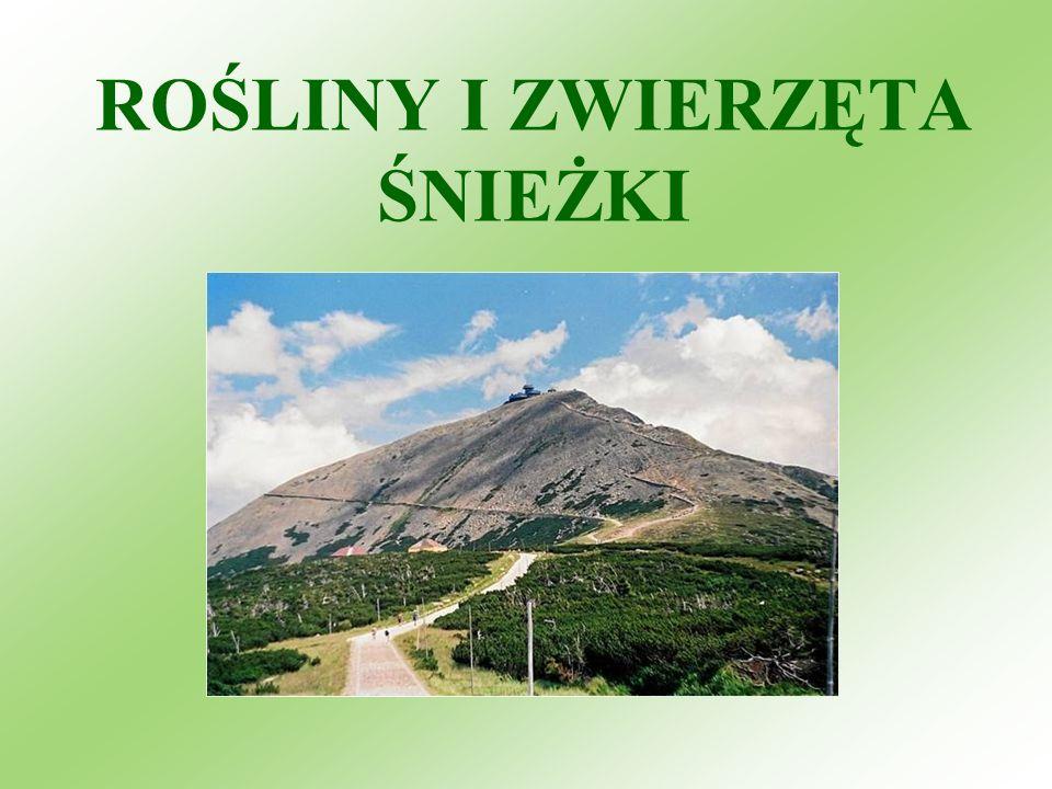 Flora Karkonoszy jest przejściowa między górami Europy Zachodniej i Karpatami Zachodnimi.
