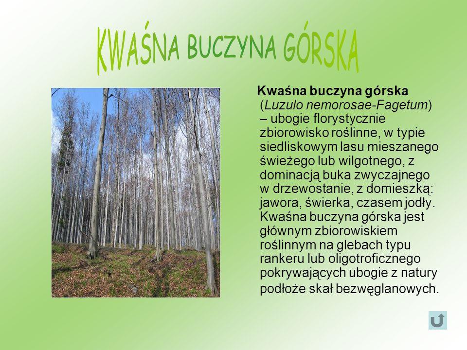 Kwaśna buczyna górska (Luzulo nemorosae-Fagetum) – ubogie florystycznie zbiorowisko roślinne, w typie siedliskowym lasu mieszanego świeżego lub wilgot
