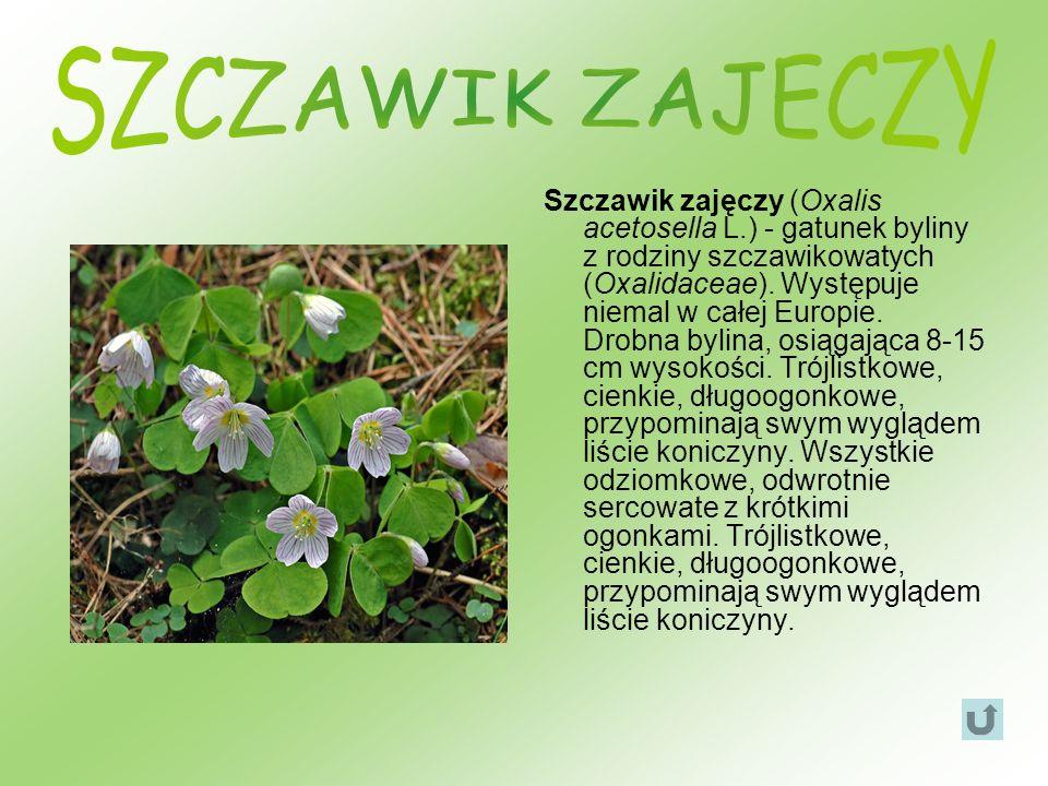 Szczawik zajęczy (Oxalis acetosella L.) - gatunek byliny z rodziny szczawikowatych (Oxalidaceae). Występuje niemal w całej Europie. Drobna bylina, osi