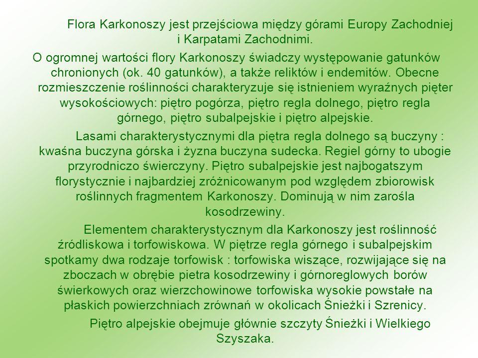 Flora Karkonoszy jest przejściowa między górami Europy Zachodniej i Karpatami Zachodnimi. O ogromnej wartości flory Karkonoszy świadczy występowanie g