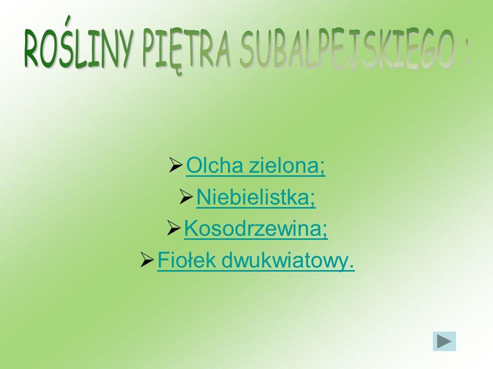 Olcha zielona; Niebielistka; Kosodrzewina; Fiołek dwukwiatowy.