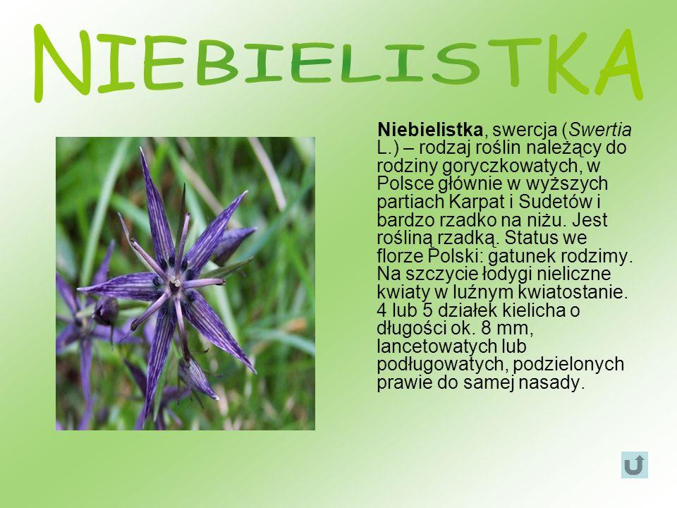 Niebielistka, swercja (Swertia L.) – rodzaj roślin należący do rodziny goryczkowatych, w Polsce głównie w wyższych partiach Karpat i Sudetów i bardzo