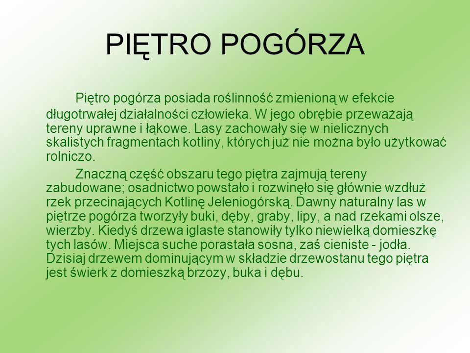 Niebielistka, swercja (Swertia L.) – rodzaj roślin należący do rodziny goryczkowatych, w Polsce głównie w wyższych partiach Karpat i Sudetów i bardzo rzadko na niżu.