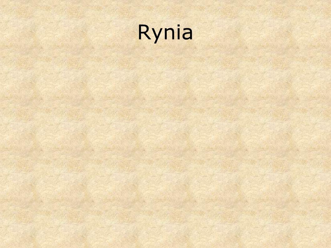 Rynia
