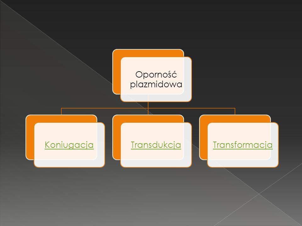 Oporność plazmidowa KoniugacjaTransdukcjaTransformacja