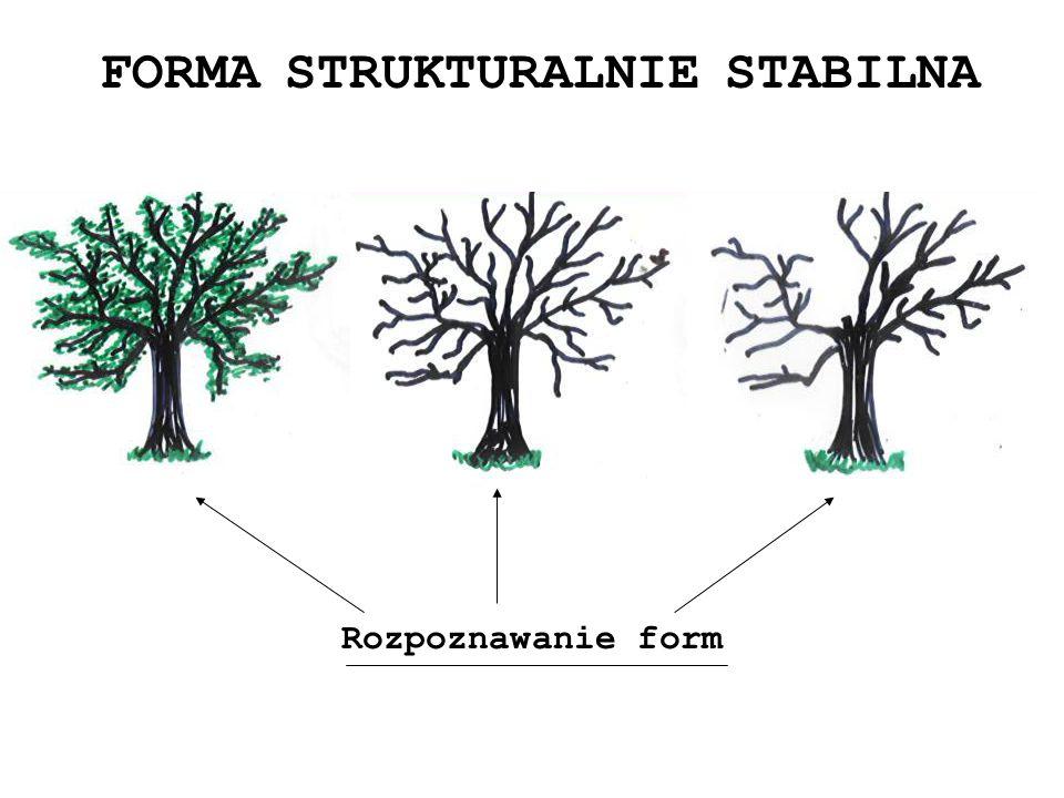 FORMA STRUKTURALNIE STABILNA Rozpoznawanie form