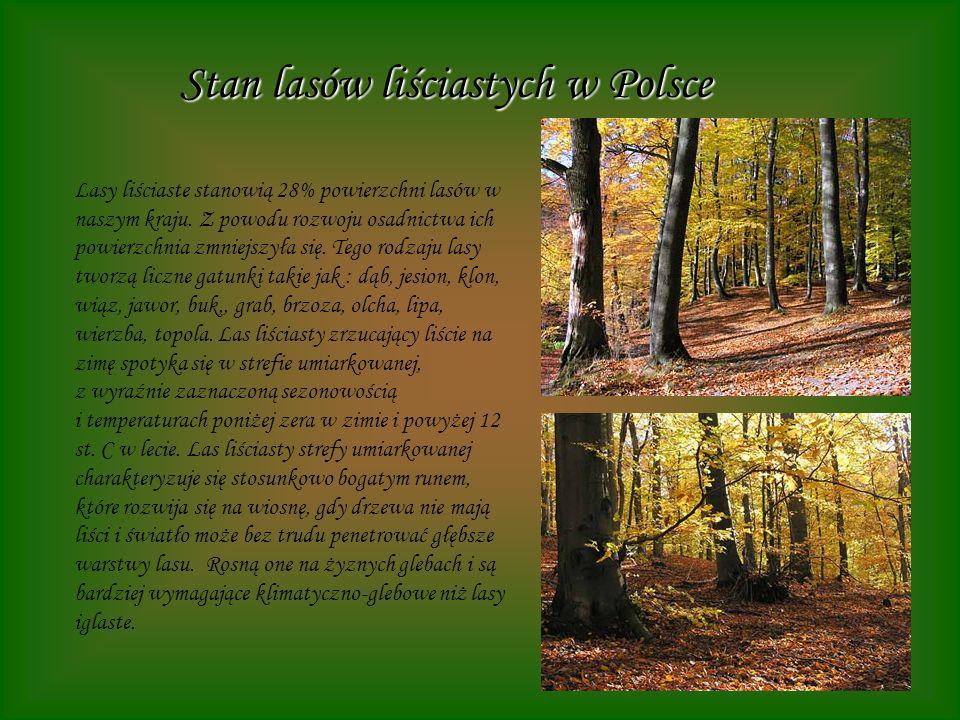 Stan lasów liściastych w Polsce Lasy liściaste stanowią 28% powierzchni lasów w naszym kraju. Z powodu rozwoju osadnictwa ich powierzchnia zmniejszyła