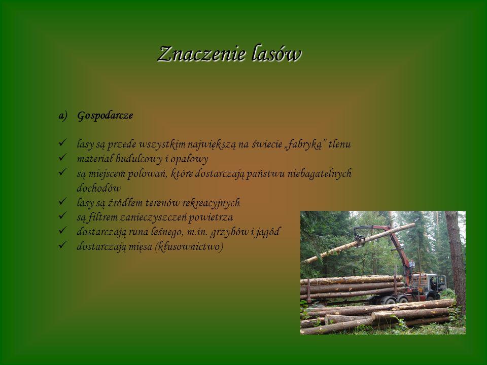 Znaczenie lasów a)Gospodarcze lasy są przede wszystkim największą na świecie fabryką tlenu materiał budulcowy i opałowy są miejscem polowań, które dos