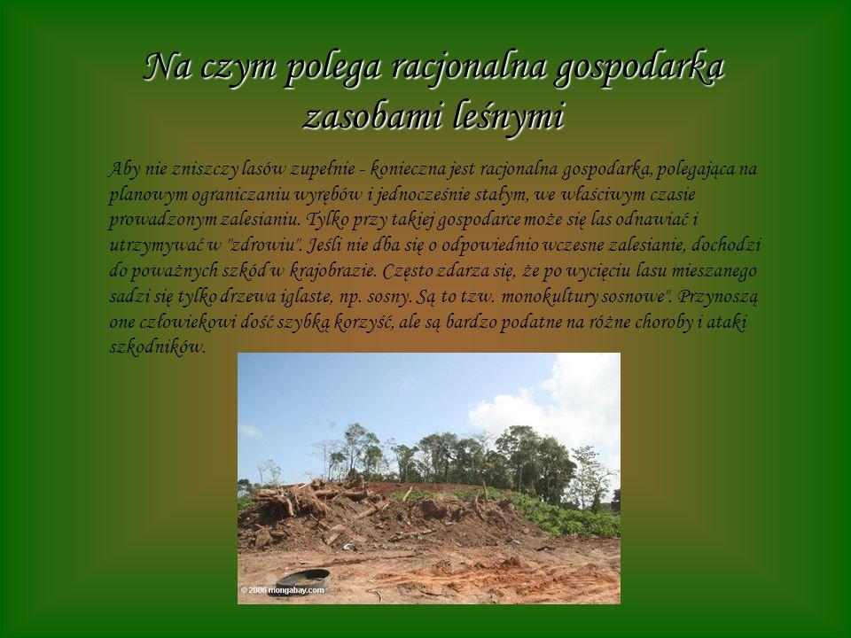 Na czym polega racjonalna gospodarka zasobami leśnymi Aby nie zniszczy lasów zupełnie - konieczna jest racjonalna gospodarka, polegająca na planowym o