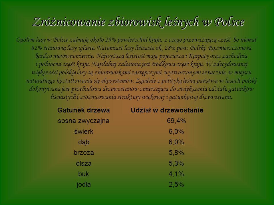 Zróżnicowanie zbiorowisk leśnych w Polsce Ogółem lasy w Polsce zajmują około 29% powierzchni kraju, z czego przeważającą część, bo niemal 82% stanowią