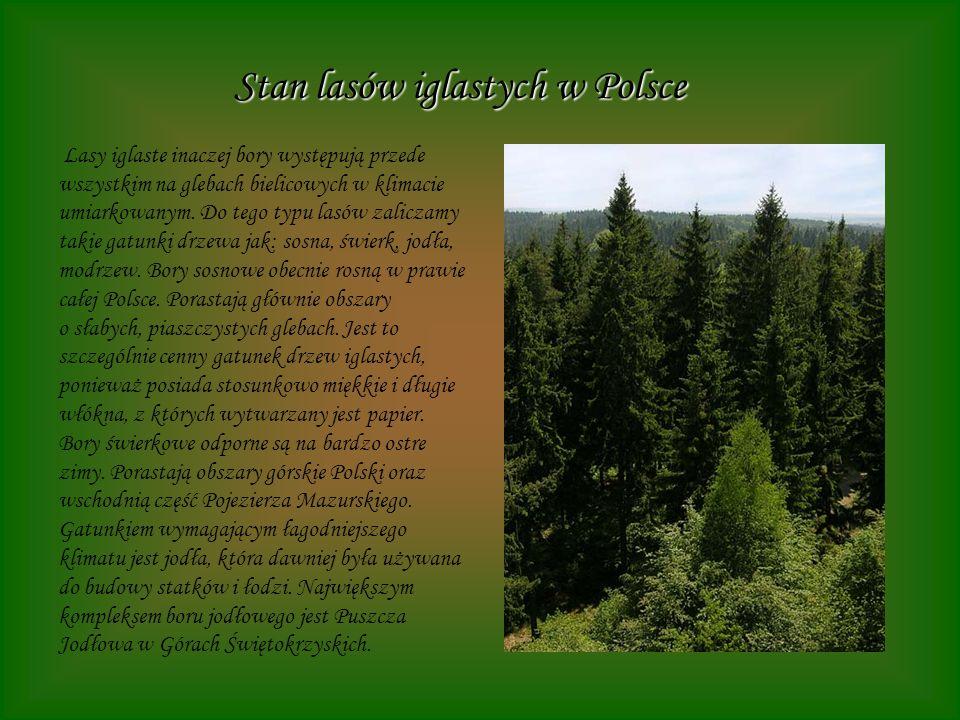 Stan lasów iglastych w Polsce Lasy iglaste inaczej bory występują przede wszystkim na glebach bielicowych w klimacie umiarkowanym. Do tego typu lasów