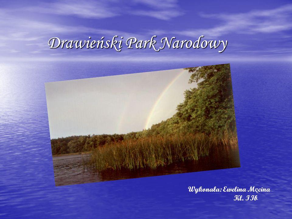 Drawieński Park Narodowy Drawieński Park Narodowy, jeden z 22 parków narodowych w Polsce, leży w północno-zachodniej Polsce, na pograniczu województw: lubuskiego, zachodniopomorskiego i wielkopolskiego.