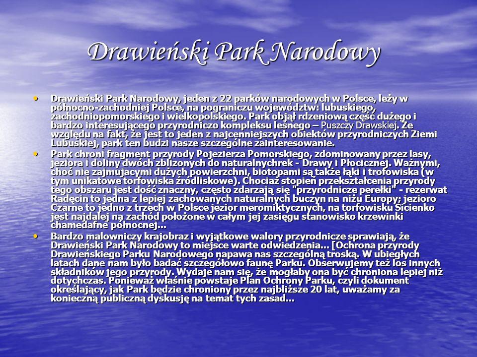 Drawieński Park Narodowy Drawieński Park Narodowy, jeden z 22 parków narodowych w Polsce, leży w północno-zachodniej Polsce, na pograniczu województw: