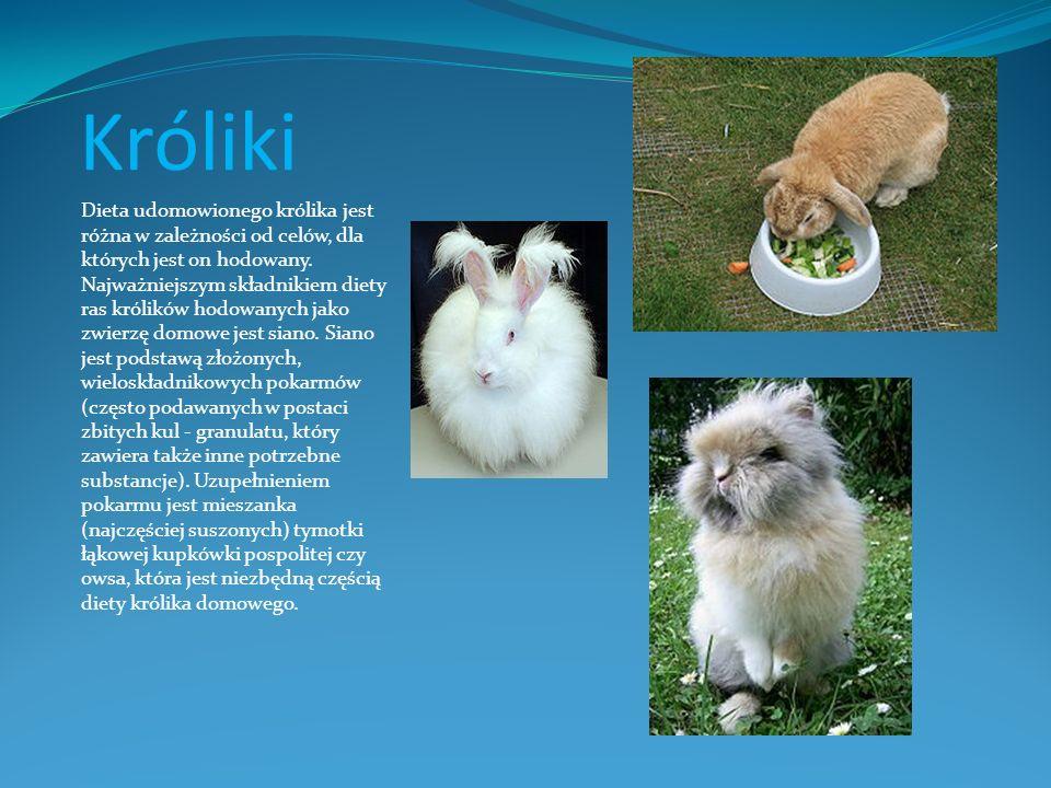 Króliki Dieta udomowionego królika jest różna w zależności od celów, dla których jest on hodowany. Najważniejszym składnikiem diety ras królików hodow
