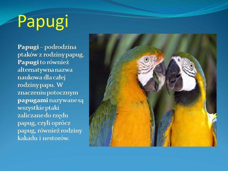 Papugi Papugi – podrodzina ptaków z rodziny papug. Papugi to również alternatywna nazwa naukowa dla całej rodziny papu. W znaczeniu potocznym papugami