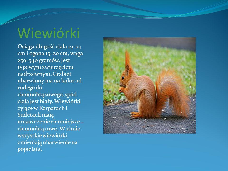 Wiewiórki Osiąga długość ciała 19-23 cm i ogona 15–20 cm, waga 250–340 gramów. Jest typowym zwierzęciem nadrzewnym. Grzbiet ubarwiony ma na kolor od r