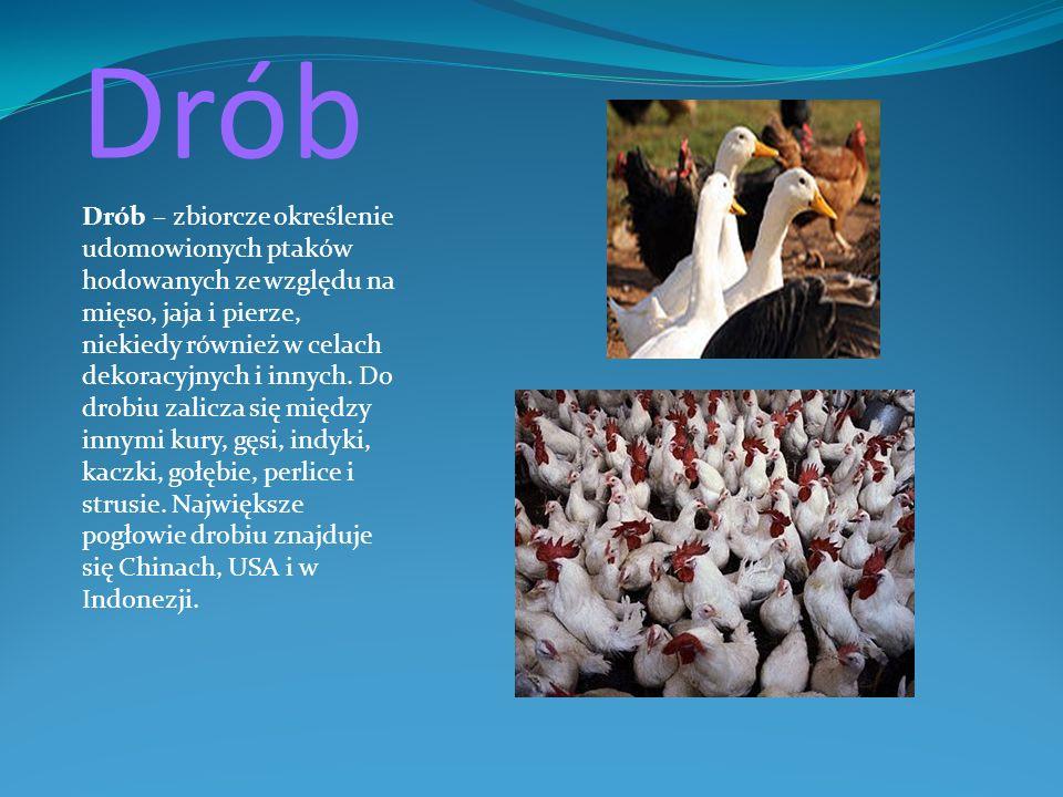 Drób Drób – zbiorcze określenie udomowionych ptaków hodowanych ze względu na mięso, jaja i pierze, niekiedy również w celach dekoracyjnych i innych. D