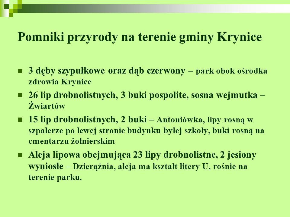 Pomniki przyrody na terenie gminy Krynice 3 dęby szypułkowe oraz dąb czerwony – park obok ośrodka zdrowia Krynice 26 lip drobnolistnych, 3 buki pospol