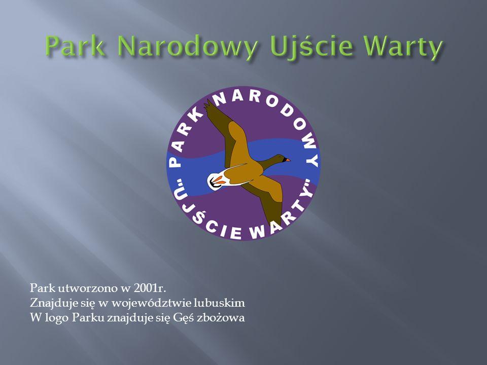 Park utworzono w 2001r. Znajduje się w województwie lubuskim W logo Parku znajduje się Gęś zbożowa