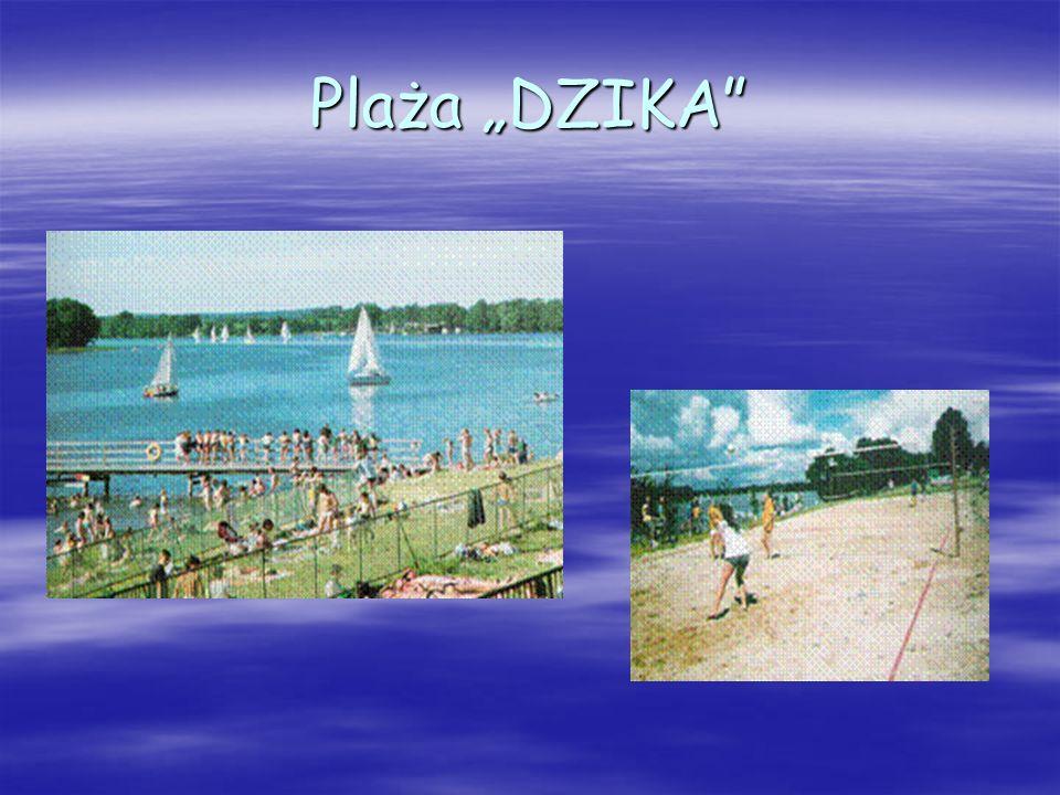 Plaża DZIKA