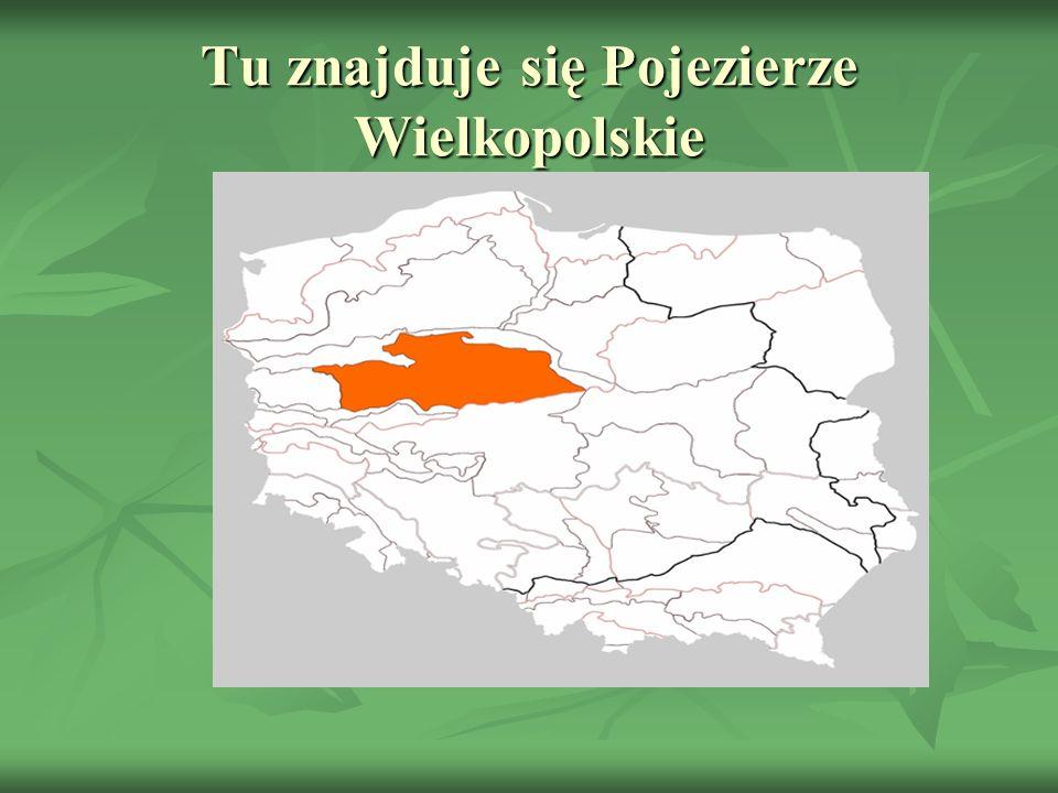Tu znajduje się Pojezierze Wielkopolskie