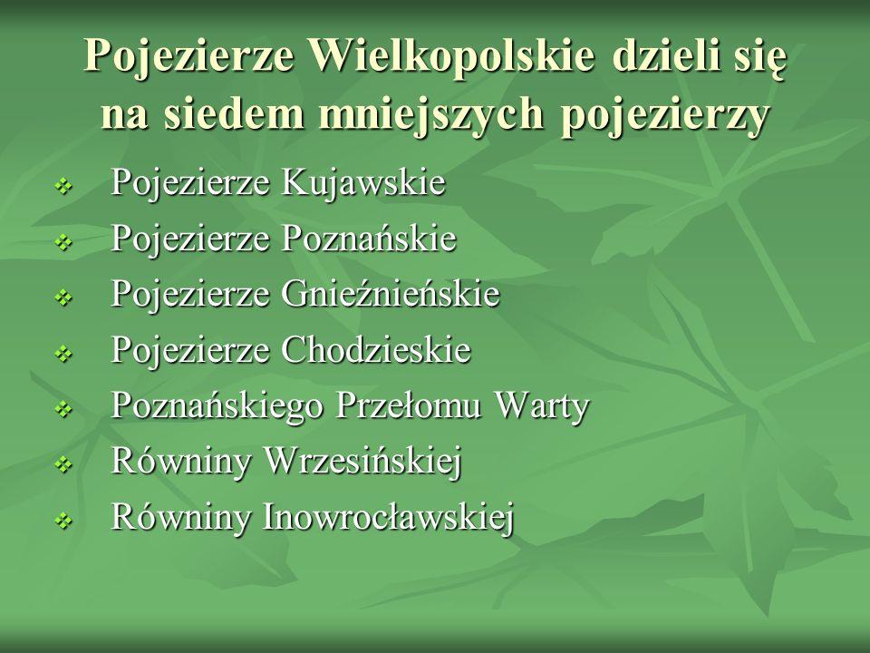 Pojezierze Wielkopolskie dzieli się na siedem mniejszych pojezierzy Pojezierze Kujawskie Pojezierze Kujawskie Pojezierze Poznańskie Pojezierze Poznańs
