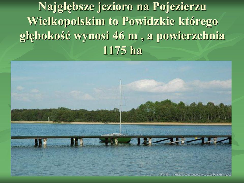 Najgłębsze jezioro na Pojezierzu Wielkopolskim to Powidzkie którego głębokość wynosi 46 m, a powierzchnia 1175 ha